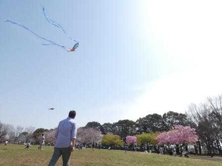 広場まわりの桜