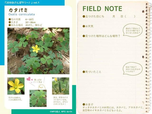 s-②20分おさんぽラリー_vol.1 カタバミ