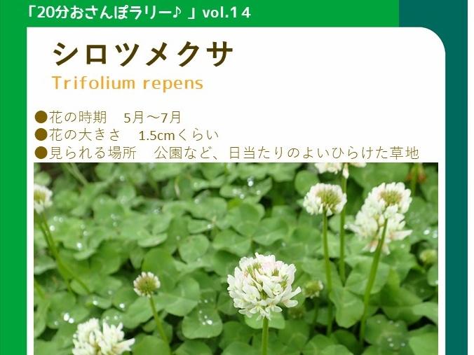 ②20分おさんぽラリー「vol.14 シロツメクサ」_タイトル